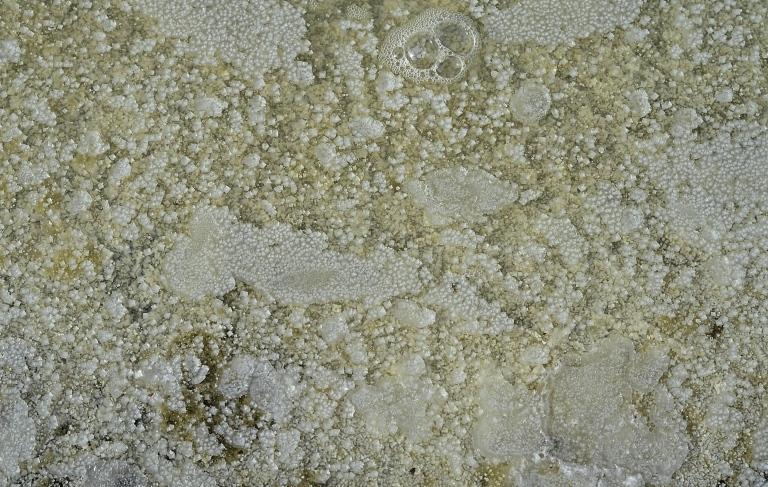 salt_3